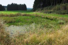 2014 - Teich - Hüttung