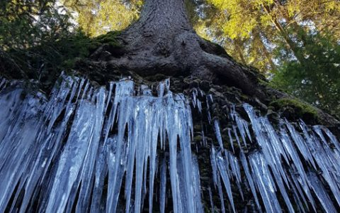 Winterwanderung 09.02.2018 - Foto: Karina Schödel, Naila