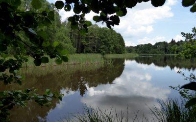 Teich und Wald