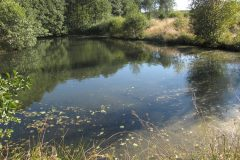 Lebensraum naturnaher Teich