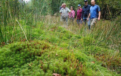 Biotop Froschbachtal 09/2019 - Torfmoos und Seggen